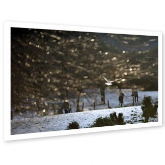 Thumbnail of Queen's Park Winter - photo print