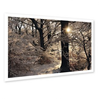 Golden Silvery - photo print